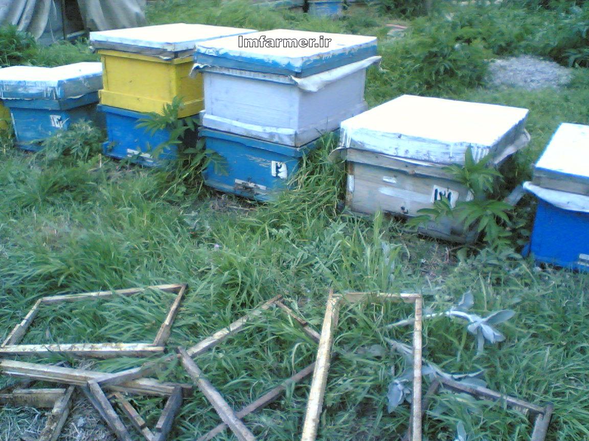 پست - 1 نویسنده خواص محصولات زنبور متفرقه در مورد پزشکي. ... این عسل بسیار خوش عطر و طعم میباشد. ملین و خون ساز است، بند آورنده خون روی است. تحلیل برنده ورم های بدن می باشد ... - ذخيره شده دریافت نتایج بحث بیشتر کاردانی ناپیوسته علمی-کاربردی پرورش زنبورعسلشده در کشورهای دیگر ارزش زنبور عسل در افزایش محصولات کشاورزی بسیار بیشتر ... ساخت وسایل زنبورداری و سرپرست واحدهای تولید و فرآوری محصولات زنبور عسل ... .html - ذخيره شده طرح توجیهی پرورش و نگهداری زنبور عسل 1000 کندویی - فروش آنلاین ...این محصول به صورت فایل می باشد و پس از پرداخت موفق توسط شما بلافاصله ... در مورد محصول چه اطلاعاتی می خواهید طرح توجیهی پرورش و نگهداری زنبور عسل 1000 ... - ذخيره شده - مشابه معجزه اعجاز طاها - معجزه زنبور عسل در قرانزنبور عسل در قران کریم مقدمه عسل یک محصول غذایی مفید و یک اکسیر پر ارزش است که از قرنها پیش به عنوان عالیترین و مقوی ترین غذاها شناخته شده و همچنین به واسطه ... - ذخيره شده نکات جالب و شگفت انگیز در مورد زنبورعسل و....انسان ها نیز به طور مستقیم و غیرمستقیم می توانند بقای زنبور عسل را تهدید کنند ، به طوری که کشت یک دست گیاهان و محصولات کشاورزی غذای زنبورها را کاهش و آنها ...  - ذخيره شده - مشابه - فواید درمانی زهر زنبور عسلمحققان توصیه می کنند که بهتـر اسـت همزمان با استفاده از زهر زنبور عـسـل از دیگر محصولات زنبور عسل نیز استفـاده شـود تا دستگاه ایمنی بدن پاسخ بهتری به درمان ... w... - ذخيره شده زنبور عسل در وبلاگ هادر كشور ايران اكثر مردم فايده زنبور عسل را منحصرا در توليد عسل مي دانند در صورتي كه تمامي محصولات زنبور عسل سراسر فايده براي انسان و محيط . ... =زنبور+عسل&cat=6 - ذخيره شده رازهای زنبور عسل : :: دانش ما :: پايگاه اطلاع رسانی علمی دانش مامحصولات زنبور عسل و نحوه گردآوری آنها می توان به شهد یا عسل و گرده زنبور عسل و بره «موم» که از صمغ ها به وجود می آید، اشاره کرد. گرده زنبور عسل دارای انواع ... -viewpub-- ذخيره شده - مشابه وبلاگ دانشجوی زراعت ساوه >> پرورش زنبور عسلبی تردید بهترین مکان استقرار یک زنبورستان در یک باغ یا مزرعه بزرگی است که محصول آن باید توسط زنبور عسل گرده افشانی شود. در این صورت علاوه بر تولید عسل برای ... agricultural-sa/ - ذخيره شده Niazmandi